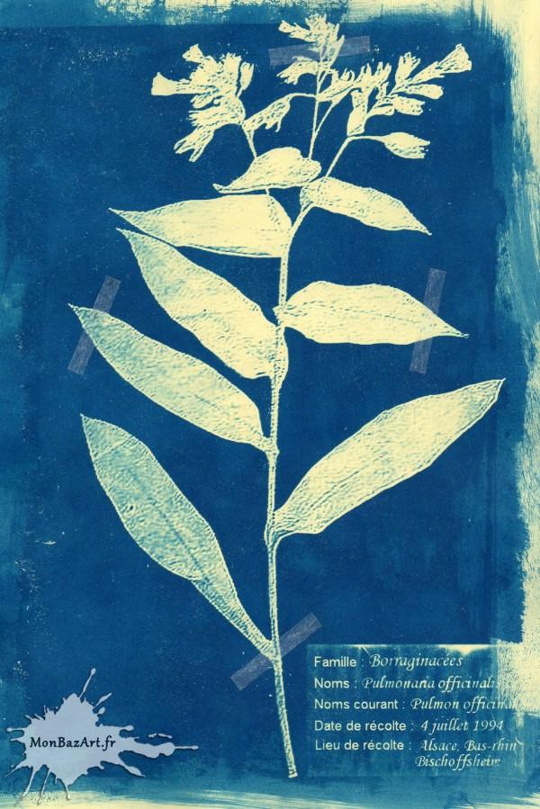 Cyanotipie monbazart (20)